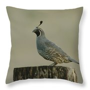 A Sole Rooster Quail Throw Pillow