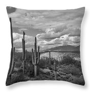 A Sonoran Winter Day In Black And White  Throw Pillow
