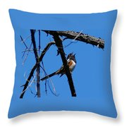 A Spotted Towhee Mid-song Throw Pillow