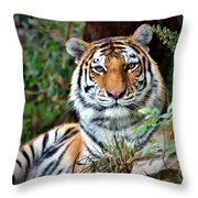 A Tigers Glance Throw Pillow