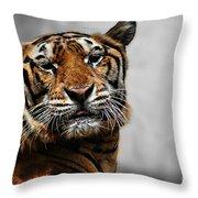 A Tiger's Look Throw Pillow