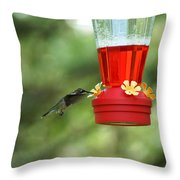 A Tiny Little Ruby-throated Hummingbirds Throw Pillow