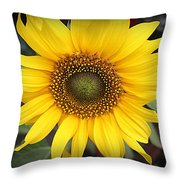 A Touch Of Sunshine - Sunflower Throw Pillow