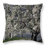 A Tree In Arlington Throw Pillow
