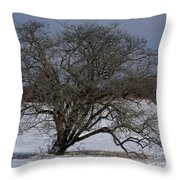 A Tree In Canaan 2 Throw Pillow