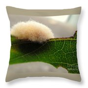 A Tribble On The Edge Throw Pillow