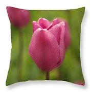 A Tulip Unfolds Throw Pillow