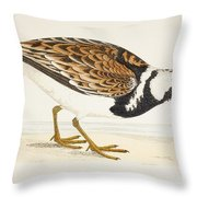 A Turnstone. Arenaria Interpres. From A Throw Pillow