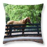 A Very Beautiful Hilton Head Island Horse Throw Pillow