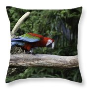 A Very Colorful And Bright Macaw Bird Perched On A Branch Throw Pillow