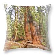 A Walk Among The Giant Sequoias Throw Pillow