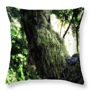 A Walk In The Woods 6 Throw Pillow