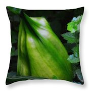 A Walk In The Woods1 Throw Pillow