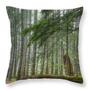 A Walk Through The Forest Throw Pillow