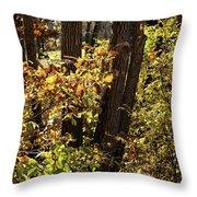 A Walk Through The Woods - 1 Throw Pillow