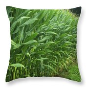 A Wall Of Corn Throw Pillow