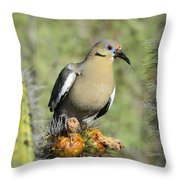 A White Winged Dove  Throw Pillow