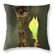 A Winter Sprout Throw Pillow