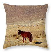 A Young Mustang Throw Pillow