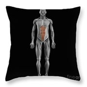 Abdominal Muscles Throw Pillow
