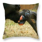 Abyssinian Ground Hornbill Throw Pillow