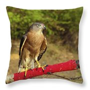 Accipiter Badius - Shikra Throw Pillow