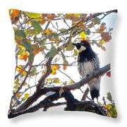 Acorn Woodpecker In Tree  In Park Sierra-ca Throw Pillow