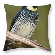 Acorn Woodpecker Melanerpes Throw Pillow