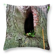 Acorns And Incense Throw Pillow
