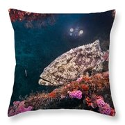Action On The Castor Throw Pillow by Sandra Edwards
