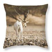 Addax Addax Nasomaculatus Throw Pillow