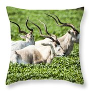 Addax Nasomaculatus Throw Pillow