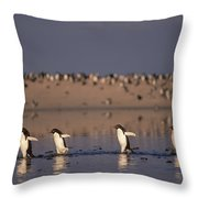Adelie Penguin Group Commuting Cape Throw Pillow