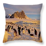 Adelie Penguin, Pygoscelis Adeliae Throw Pillow