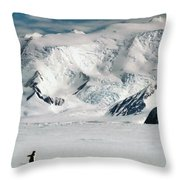 Adelie Penguins At Cape Hallett Throw Pillow