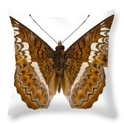 Admiral Limenites Butterfly Throw Pillow