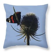Admiral Teasel Throw Pillow