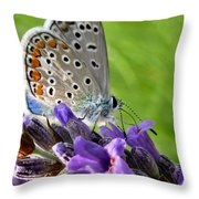 Adonis Blue Butterfly Of Monteriggioni Throw Pillow