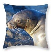 Adorable Sealion Throw Pillow