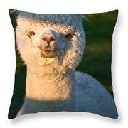 Adorable White Alpaca Portrait Throw Pillow