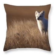 Adult Arctic Fox On The Tundra In Late Throw Pillow
