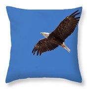 Adult Bald Eagle Soaring Haliaeetus Leucocephalus Throw Pillow