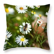 Adult Female Drone Fly Aka Bee Mimic Throw Pillow