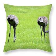 Adult Florida Sandhill Cranes Grus Canadensis Pratensis I Usa Throw Pillow