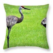 Adult Florida Sandhill Cranes Grus Canadensis Pratensis II Usa Throw Pillow