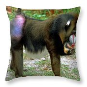 Adult Male Mandrill Papio Sphinx Throw Pillow