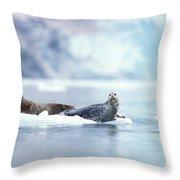 Adult Pacific Harbor Seals On An Ice Throw Pillow