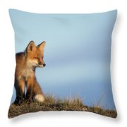 Adult Red Fox On The Tundra In Late Throw Pillow