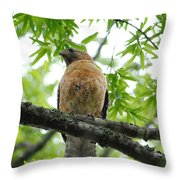 Adult Red Shouldered Hawk Throw Pillow