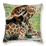 Adult Reticulated Giraffe Throw Pillow